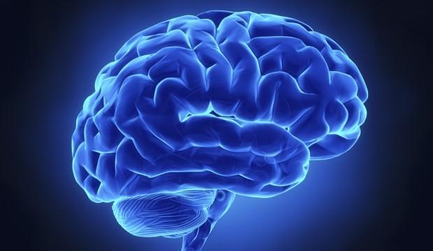 hjärna2