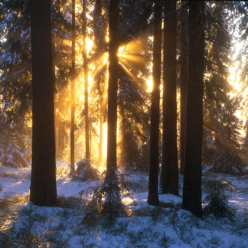 lahall skog